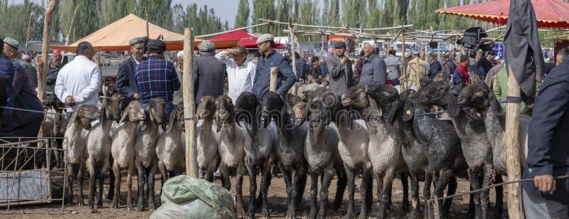 Panorama dos compradores e dos vendedores no mercado dos carneiros, Kashgar, China imagens de stock royalty free