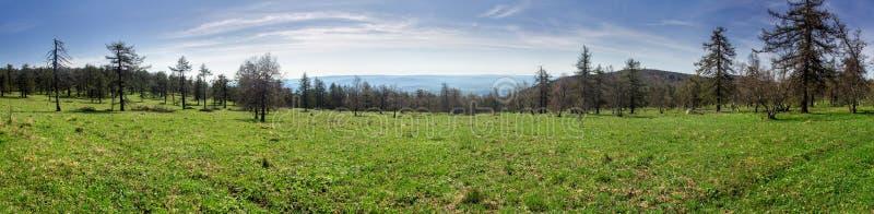 Panorama dos prados e das árvores verdes luxúrias da mola imagens de stock