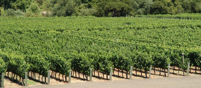 Panorama dos vinhedos fotografia de stock