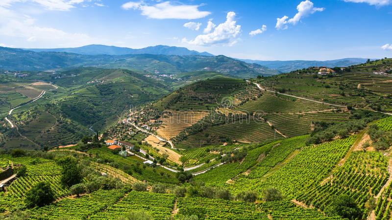 Panorama of Douro Valley, Portugal. Top view of vineyards are on a hills royalty free stock photography