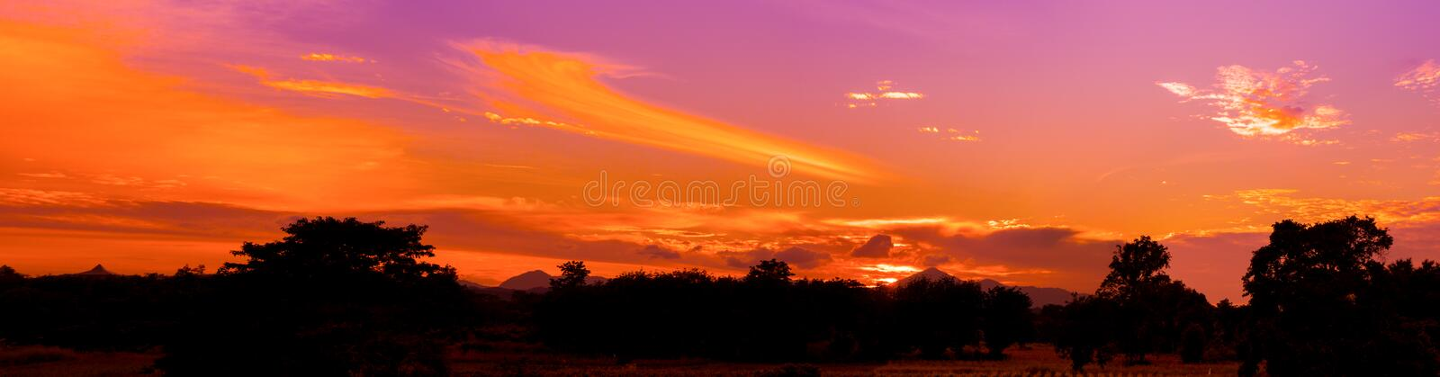 Panorama dramatic sunset in sky beautiful colorful which has sun light orange landscape silhouette tree woodland twilight time wit royalty free stock image