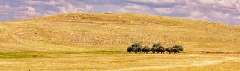 Panorama du petit groupe d'arbres photos libres de droits