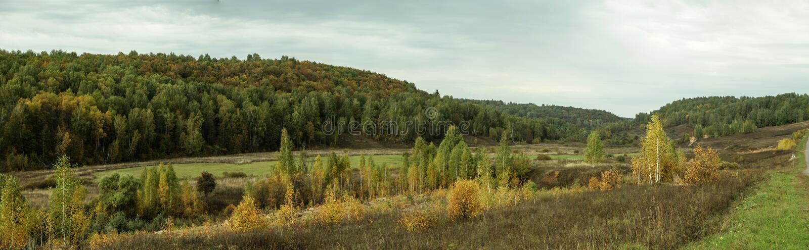 Panorama of edge of forest with planting of young trees royalty free stock photos