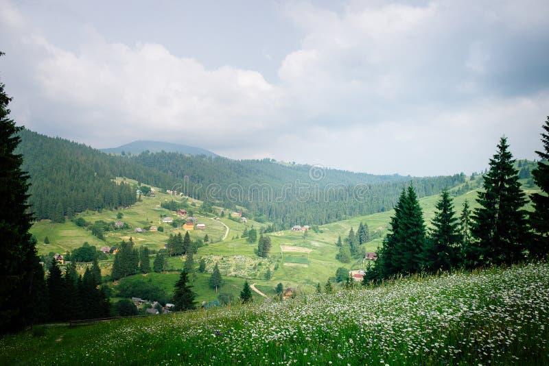 Panorama ensoleillé avec du charme du pré et du coutryside de marguerite au fond des montagnes couvertes de vert épais photographie stock