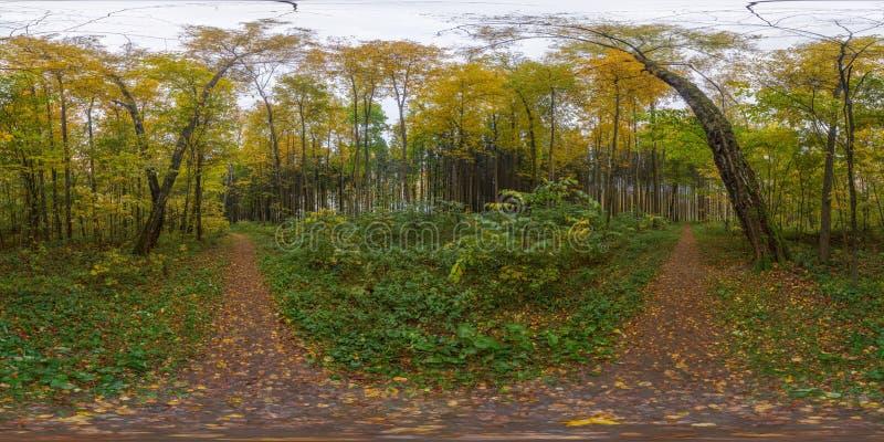 Panorama esférico da floresta do outono imagens de stock
