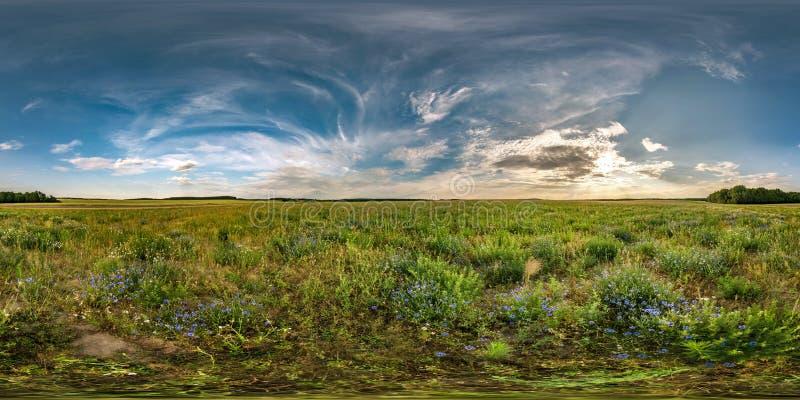 Panorama esférico sem emenda completo do hdri 360 graus de opinião de ângulo entre campos das centáureas no por do sol da noite d imagens de stock