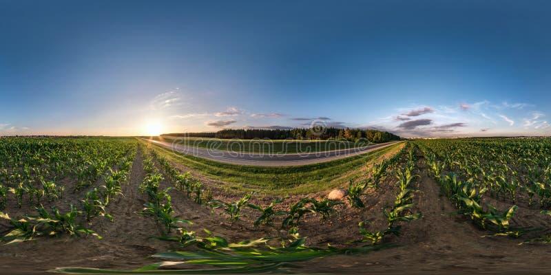 Panorama esférico sem emenda completo do hdri 360 graus de opinião de ângulo perto da estrada asfaltada entre o campo de milho no fotografia de stock royalty free