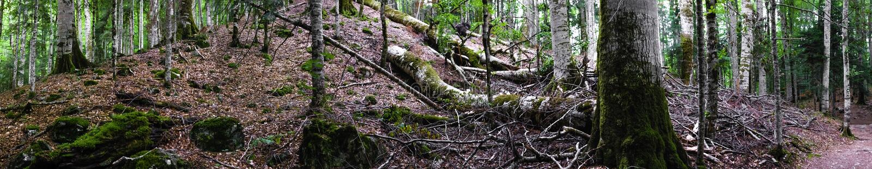 Panorama extremamente largo da floresta profunda imagens de stock royalty free