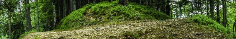 Panorama extremamente largo do trajeto de florestas profundo fotografia de stock