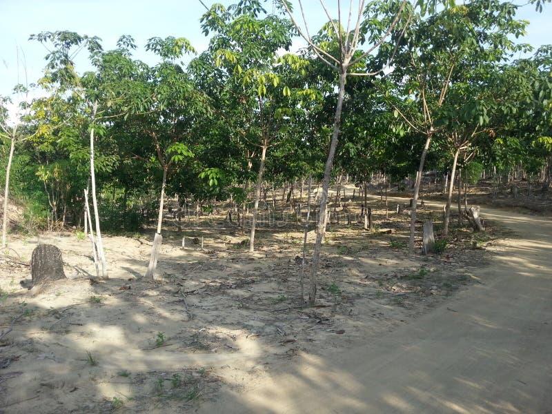 Panorama för Bangka ö royaltyfria foton