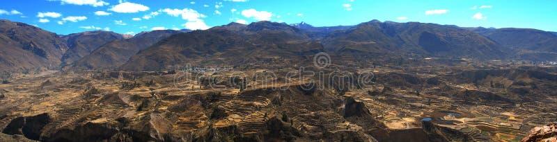 Panorama för det Colca dallandskapet terrasserar Peru arkivbild