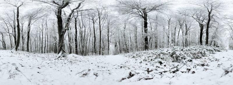Panorama för härlig vinter mest forrest 360 grader arkivfoto