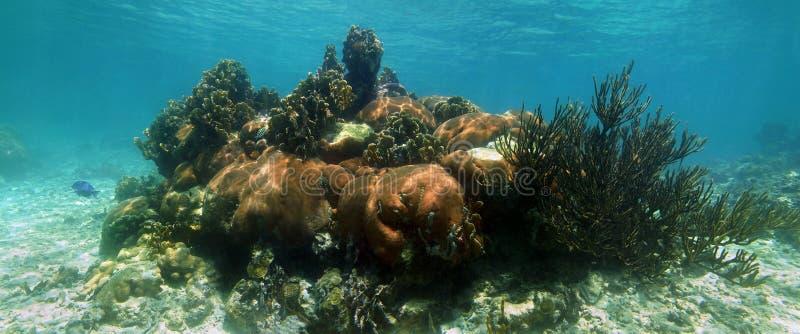 Panorama för korallrev fotografering för bildbyråer