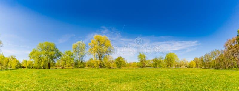 Panorama för sommarvårlandskap Gröna träd och grönt gräs under blå himmel arkivfoto