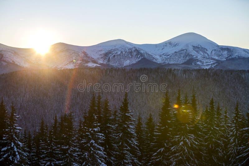 Panorama för vinterberglandskap på soluppgång Klar blå himmel över mörk gran sörjer trädskogen som täckas med snöberget arkivfoto