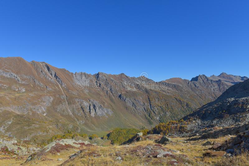 Panorama fabuloso com os pinhos verdes e amarelos e larchepanorama com a rocha nas montanhas altas foto de stock