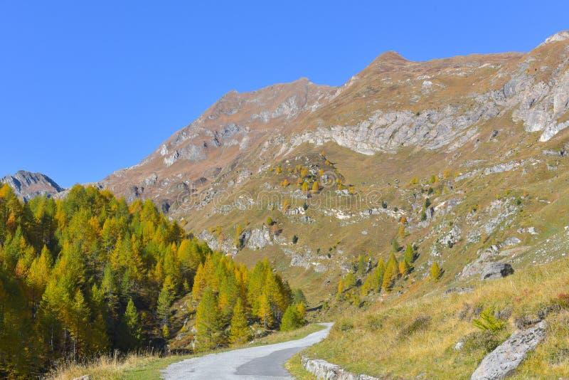 panorama fabuloso con los pinos verdes y amarillos y los alerces foto de archivo