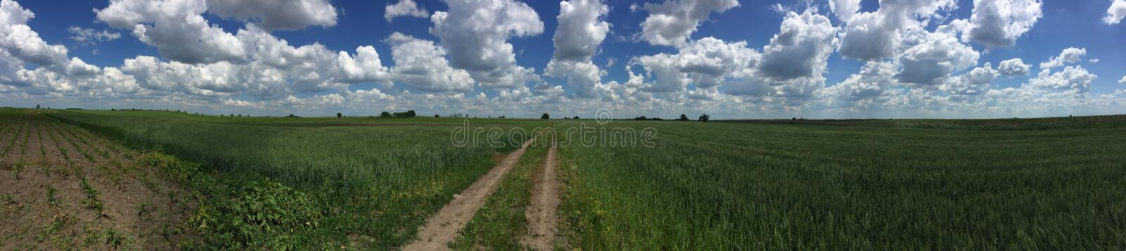 Panorama of a field royalty free stock images
