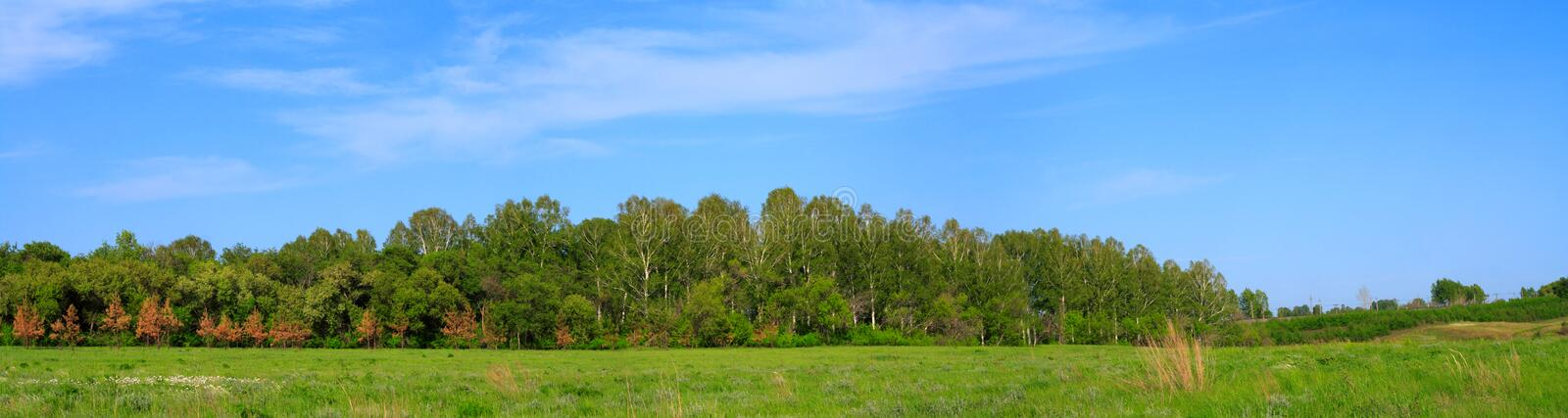 Panorama of a field before a wood stock images