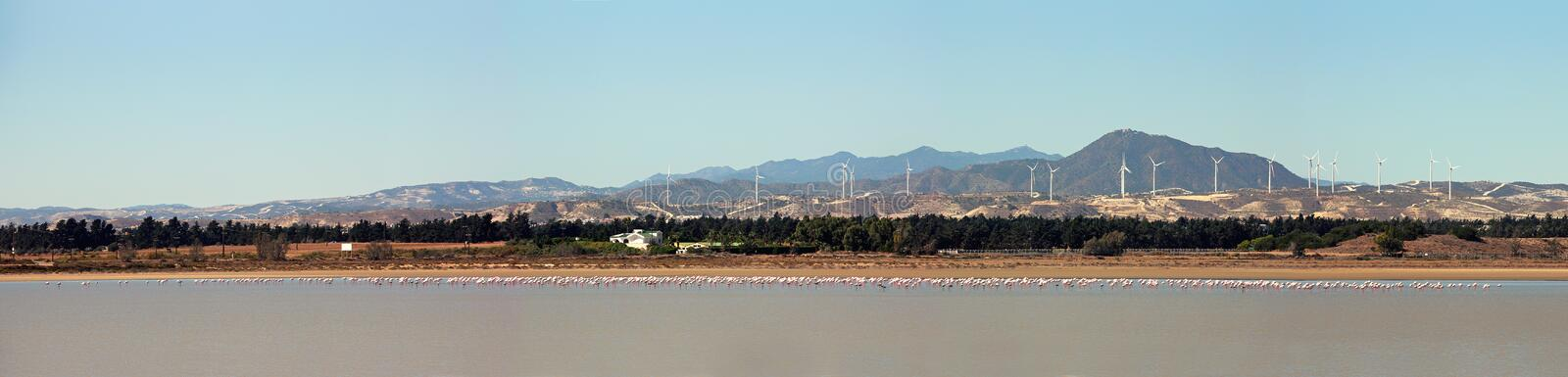 Panorama. Flock of pink flamingos at the Larnaca salt lake, Cyprus. Hills with windmills on background.  stock photo