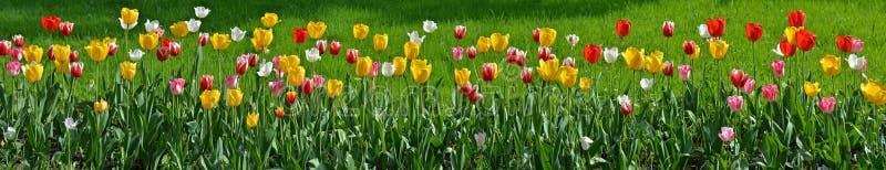 Panorama floral foto de archivo