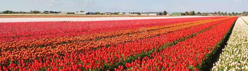 Panorama of flower fields
