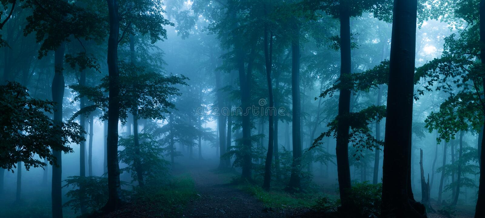 Panorama of foggy forest. Fairy tale spooky looking woods in a m. Isty day. Cold foggy morning in horror forest royalty free stock photos