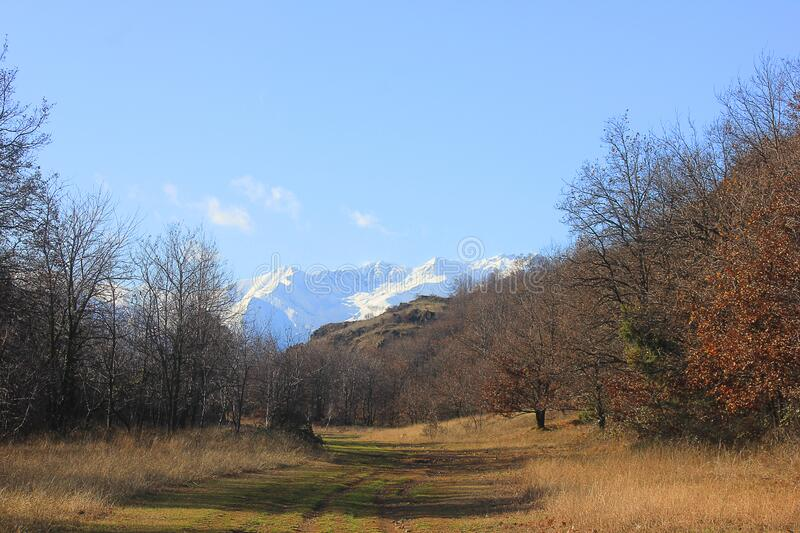 Panorama with forest and mountains stock images