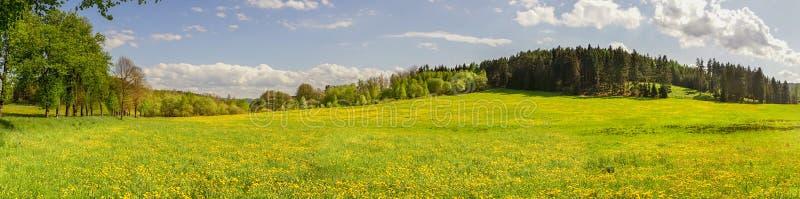 Panorama- fotografi av maskrosfältet med sörjer trädskog b royaltyfria foton