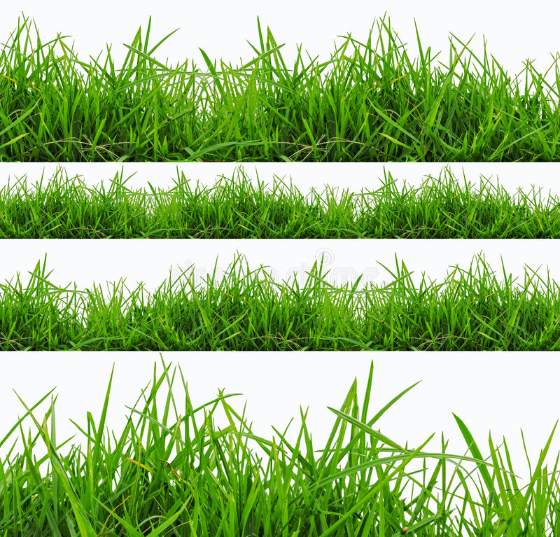Panorama frais d'herbe verte de ressort d'isolement sur le fond blanc. photographie stock libre de droits