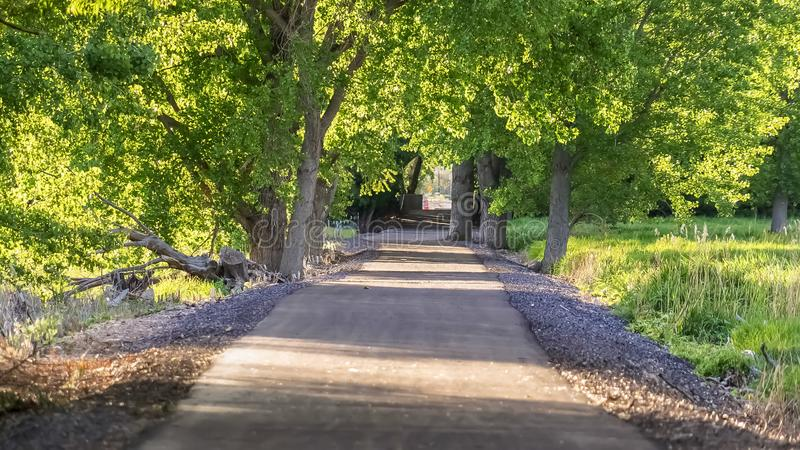 Panorama frame Paved road running under a vibrant green canopy of tree leaves on a sunny day stock photos