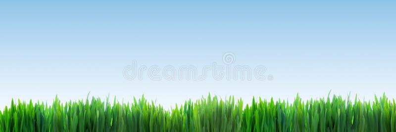 Panorama fresco de la hierba verde en fondo claro de cielo azul fotografía de archivo