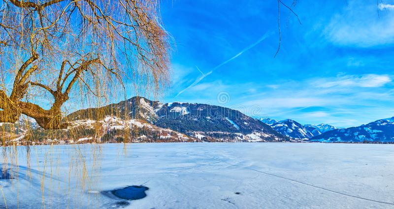 Panorama of frozen lake with weeping tree, Zell am See, Austria stock image