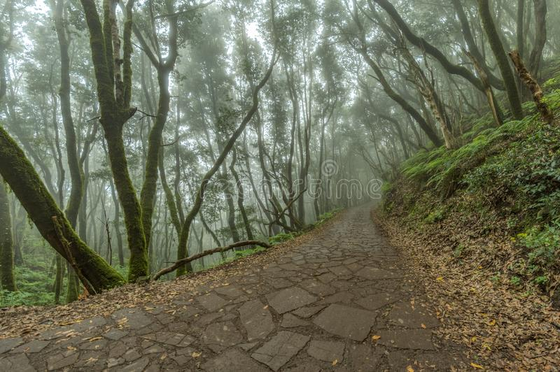Panorama granangular estupendo Bosque del residuo en las cuestas de las montañas del parque nacional de Garajonay Laureles y árbo foto de archivo libre de regalías