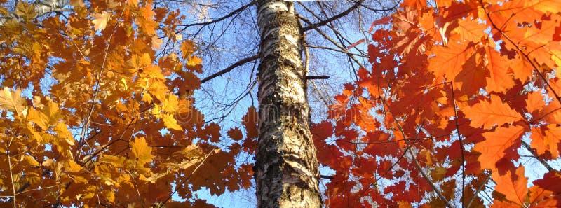 Panorama grande del otoño de la talla foto de archivo