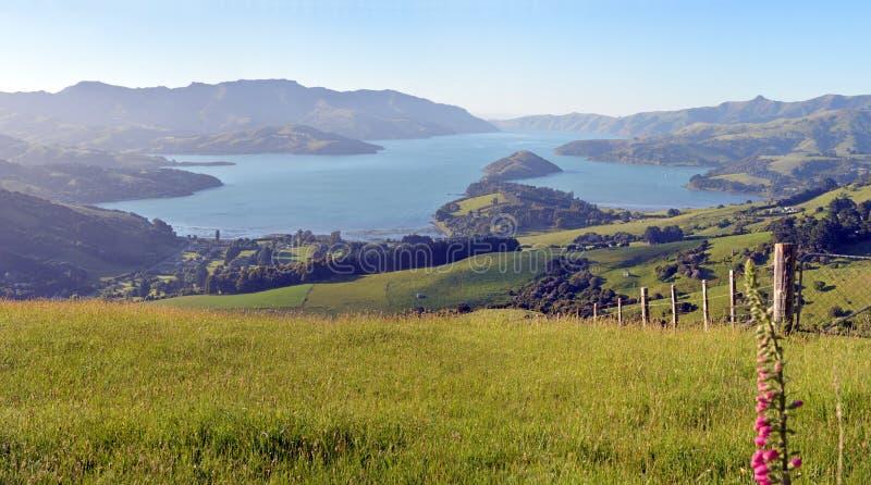Panorama grande estupendo de la madrugada del puerto de Akaroa, Nueva Zelanda fotografía de archivo libre de regalías
