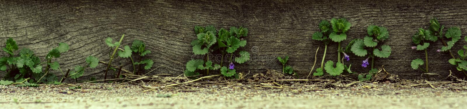 Panorama grass and wildflowers on wooden background royalty free stock photos