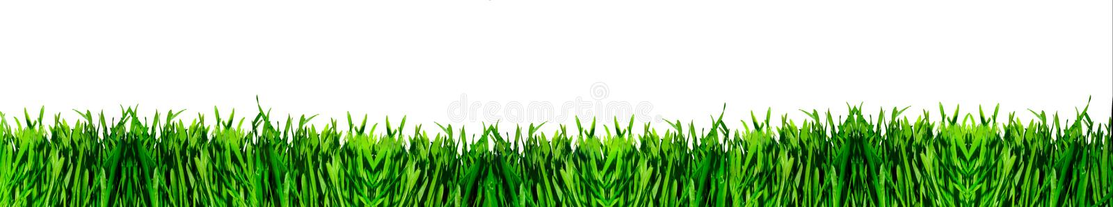 Download Panorama green grass stock image. Image of panorama, landscape - 5058745