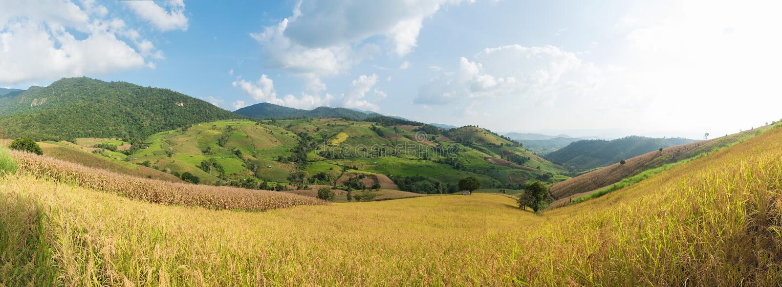 Panorama of green rice fields on terraced in Thailand, rice terr stock photos