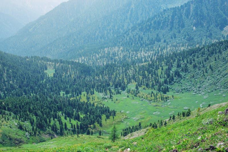 Panorama halna dolina zakrywająca z zielonym lasem w mgle obrazy royalty free