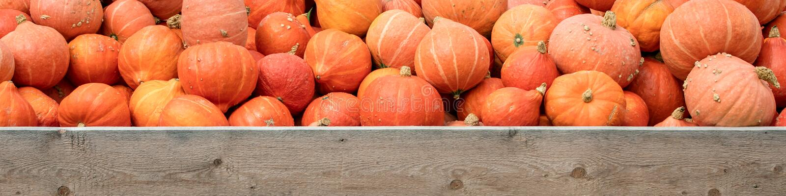 Panorama, lots of orange Hokkaido pumpkins, wooden sign with cop royalty free stock image