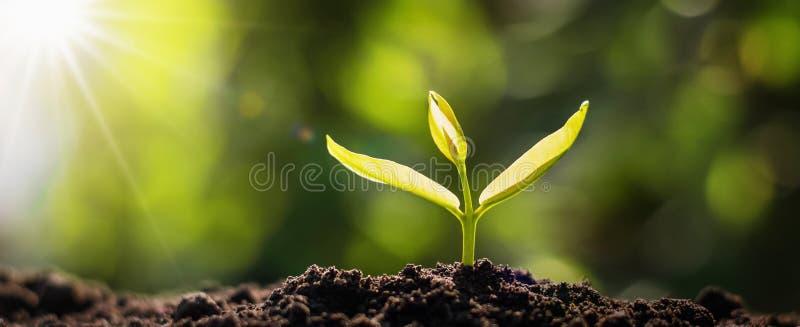 panorama het kleine boom groeien met zonsopgang groen wereld en aardedagconcept royalty-vrije stock foto's