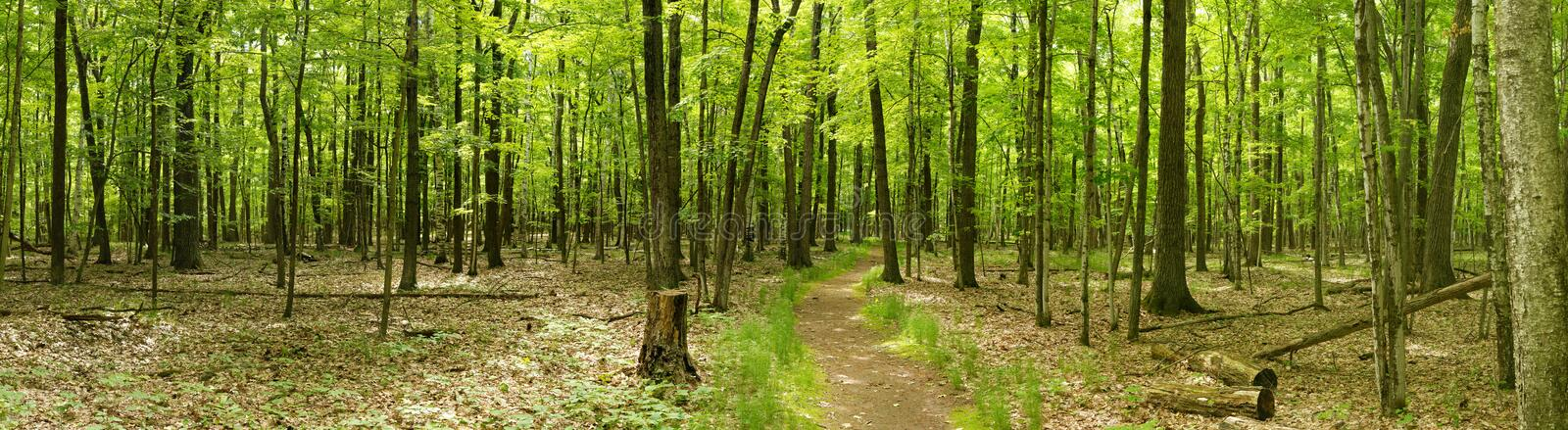 Panorama - Ice Age Trail - deep woods portion late spring sunny day royalty free stock image