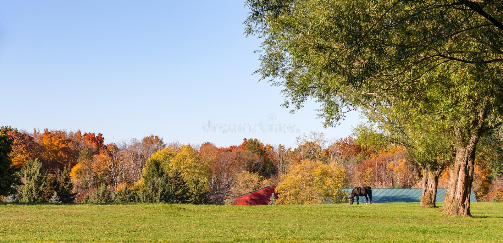 Panorama of an Idyllic Pasture with Grazing Horse and Copy Space stock image