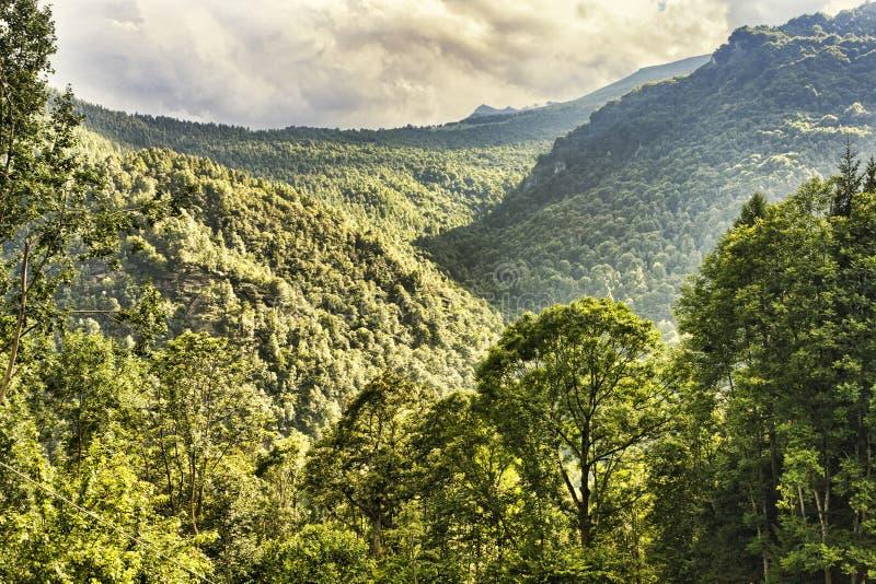 Panorama impressionnant de forêt de montagne, vue supérieure des collines, montagnes et vallées avec différentes nuances de vert  photographie stock libre de droits