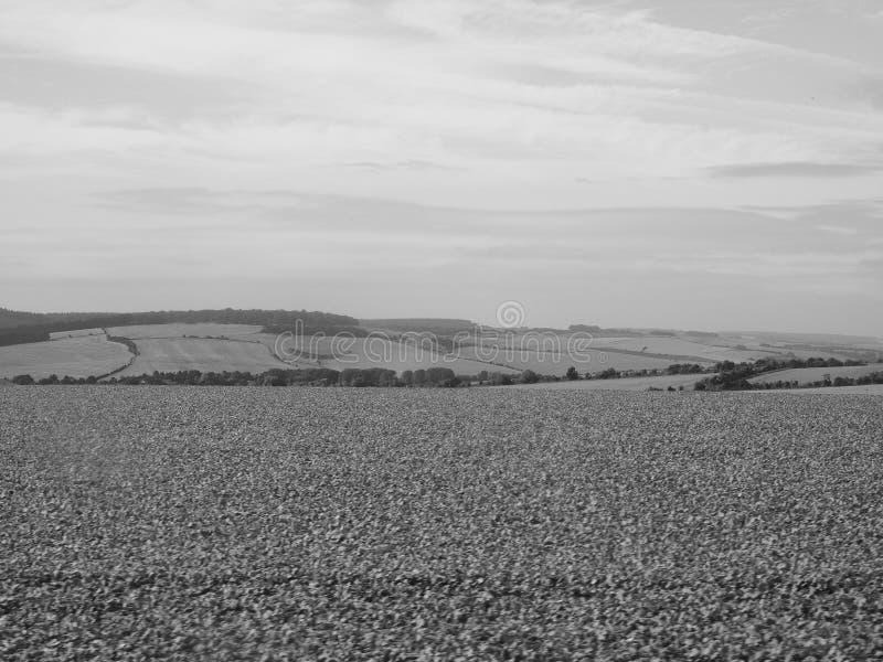 Panorama inglés del país en Salisbury en blanco y negro imagen de archivo