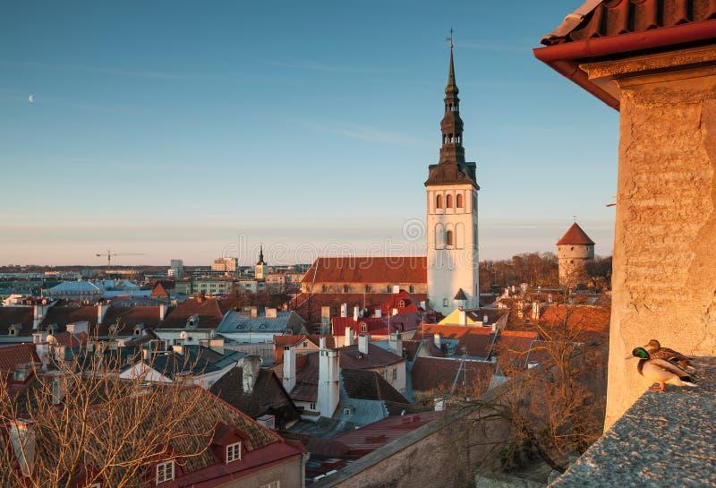 Panorama iniziale di mattina della molla di vecchia Tallinn fotografie stock libere da diritti
