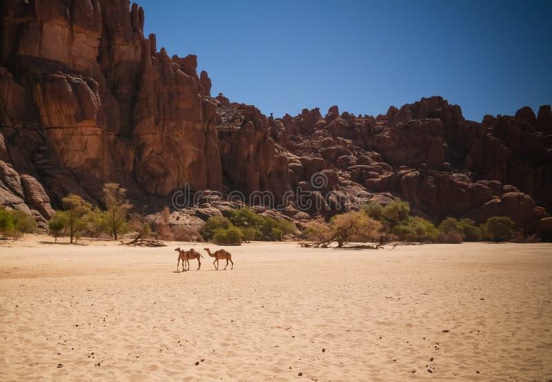 Panorama innerhalb der Schlucht alias Guelta d ?Archei in Ost-Ennedi, Tschad lizenzfreie stockfotos
