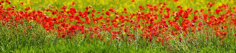 Panorama integrado por amapolas, hierbas y flores del campo imágenes de archivo libres de regalías