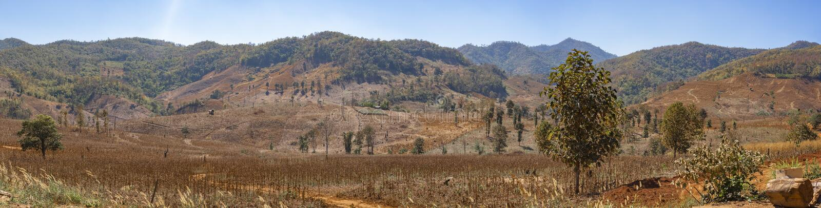 Panorama of the invading forest burned trees, dry cracked soil.Nature and environment Concept. Panorama of the invading  forest burned trees, dry cracked soil royalty free stock photo